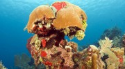 Dive and Experience Roatan at All-Inclusive Mayan Princess Beach Resort