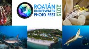 New Website Unveiled for Roatan Underwater Photo Festival