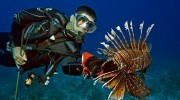 REEF 2015 Summer Lionfish Derby Series Dates Released