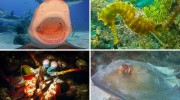 Sealife offers Tips for Capturing Stunning Underwater Video Subjects
