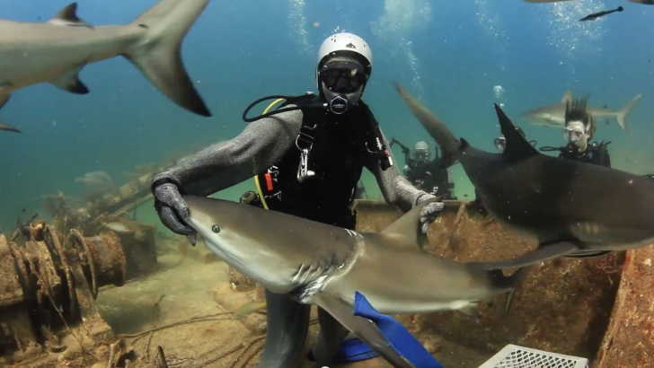 Amazing Video: Shark asks for help in the Bahamas – Stuart Cove dive staff responds