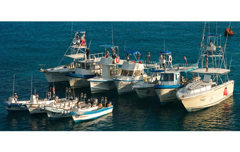Dive Paradise Cozumel Offers Cruise Ship Passengers BOAT-TO