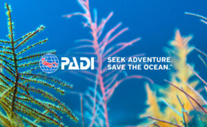 Seek Adventure and Save the Ocean This Holiday Season